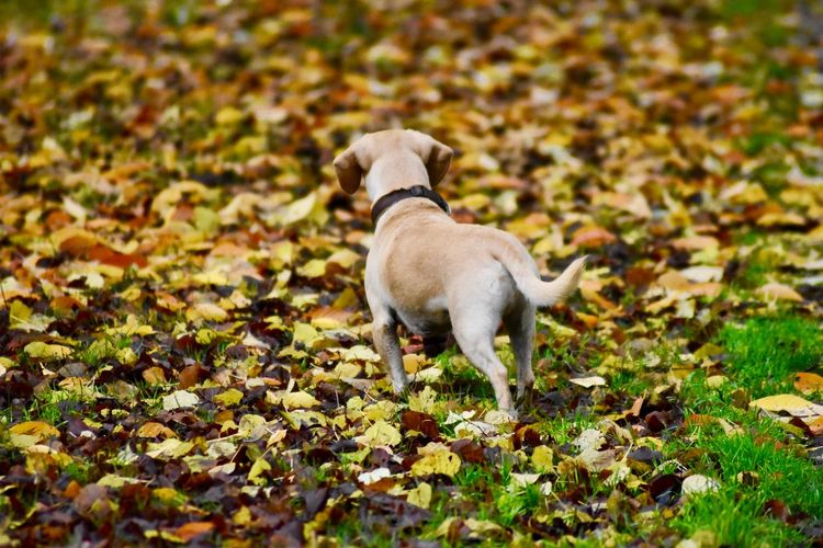 Dog standing on autumn leaves