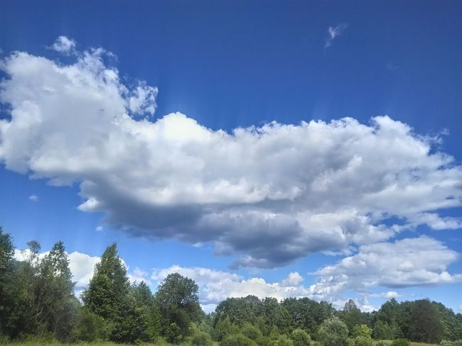 Blue Sky Tree Cloud - Sky Low Angle View No People Nature Day Beauty In Nature Outdoors Freshness