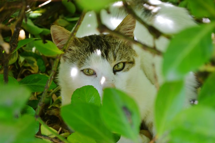 Leaf Twigs Portrait Looking At Camera Leaf Closing Close-up Green Color Animal Eye Cat Eye Animal Head  Nose Animal Body Part Eye Color Snout Animal Nose Yellow Eyes