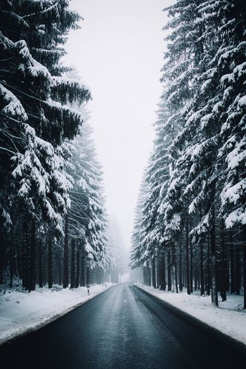 Empty Road Amidst Snow Covered Trees