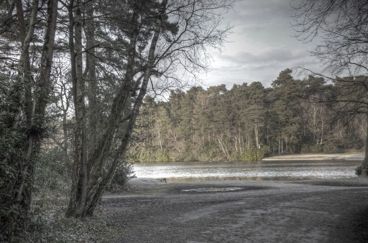 Across The Water Beauty In Nature Forest Lakeside Landscape Nature Tranquility Tree Water WoodLand