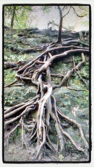 Landscape_Collection A Walk In The Park Tree Roots  Tree Of Life
