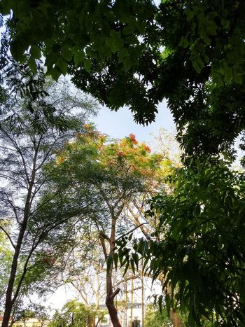 Tree Low Angle View Growth Branch Nature Day Beauty In Nature No People Outdoors Green Color Tranquility Leaf Sky Forest Plant Plants Plants And Flowers Plants 🌱 Plant Life Plant Photography Nature Nature_collection Nature Photography Naturelovers Nature On Your Doorstep