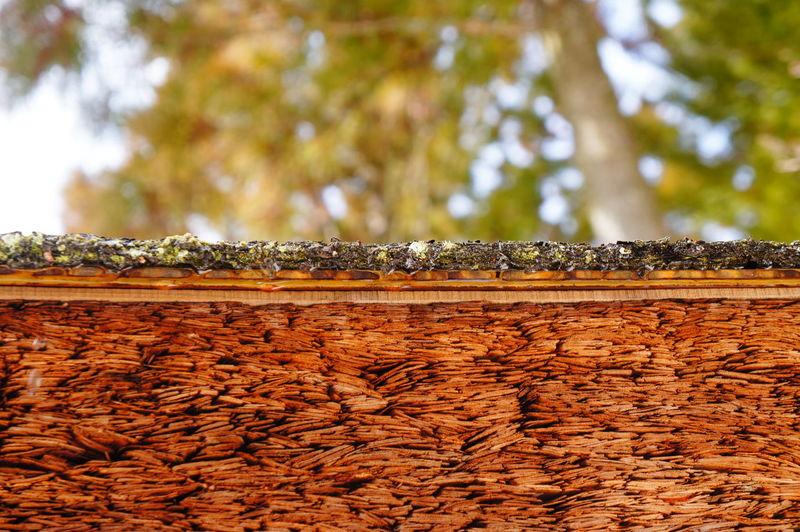 Retaining wall against tree