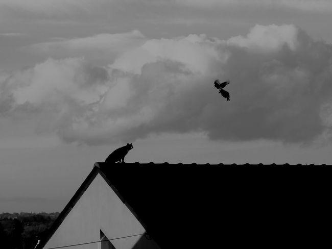 When Cat See Bird Nice Crazy Love Picture Blackandwhite