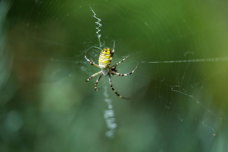 Animal Leg Animal Themes Animal Wildlife Animals In The Wild Beauty In Nature Close-up Fear Fragility Insect Nature No People One Animal Outdoors Phobia Spider Spider Web Spinning Survival Web