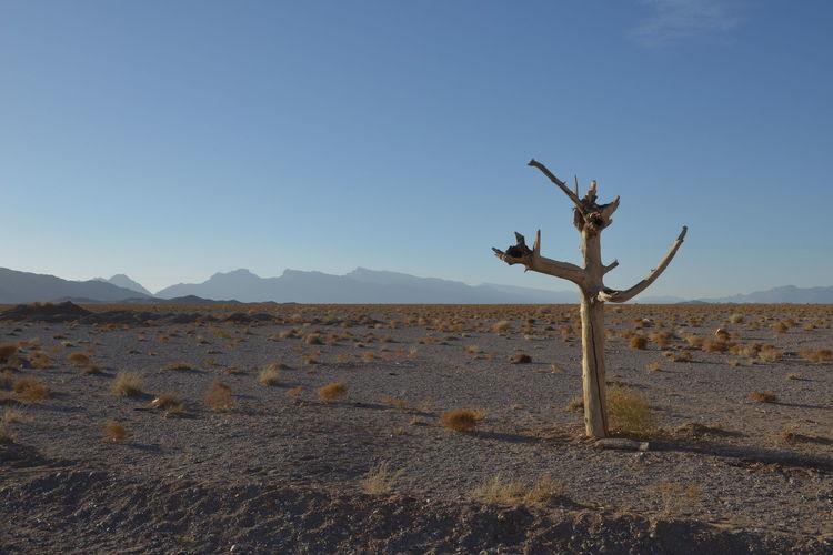 Baum Ohne Laub