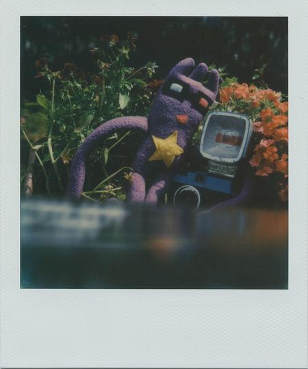 Taking Photos Having Fun Taking Pictures Polaroid Pictures Impossible Project Real Polaroid Polaroid Sx-70 Polaroid SX-70
