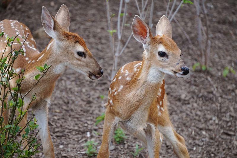 Deer near barracks Animal Wildlife Animals In The Wild Nature Close-up Outdoors Deer Animals
