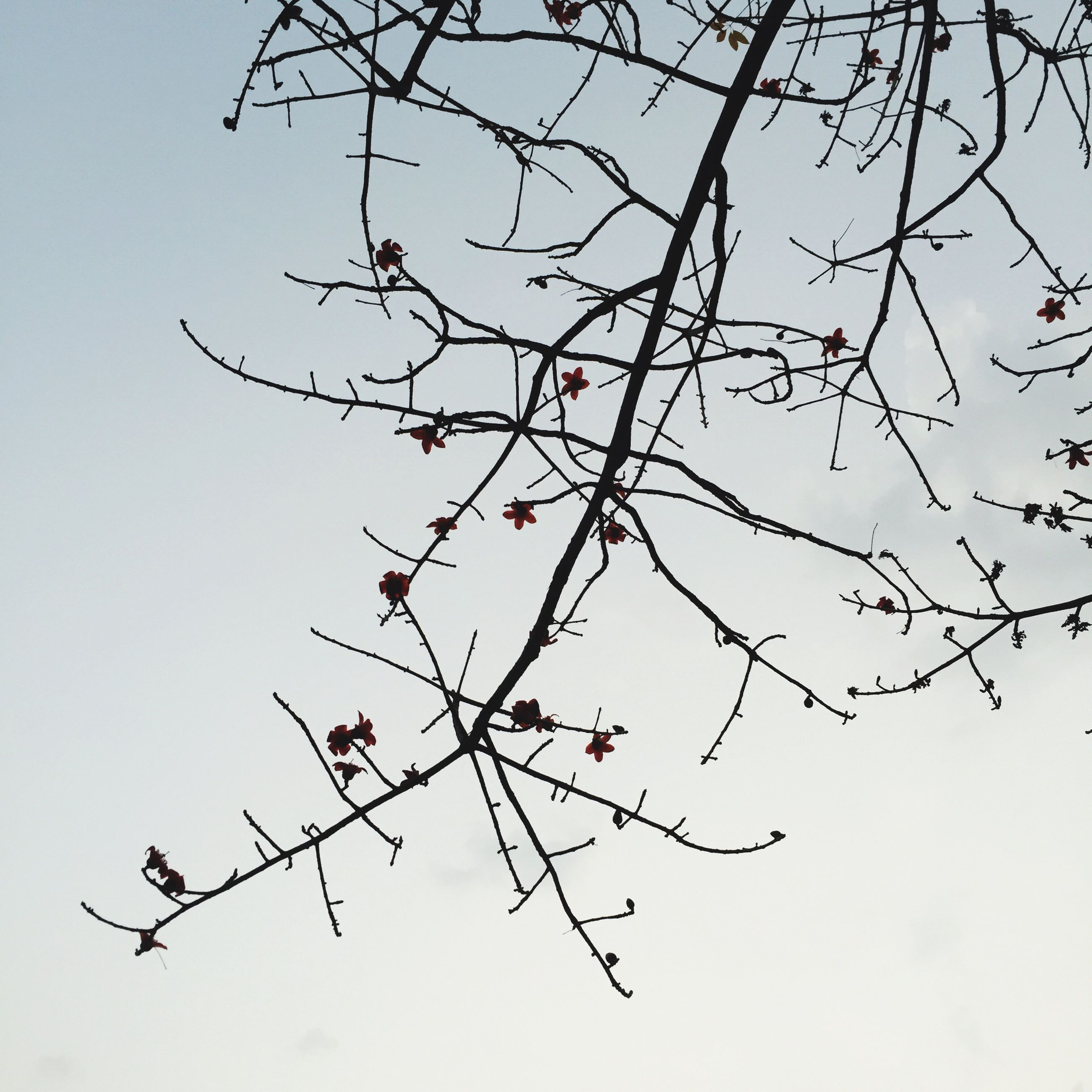 branch, low angle view, bare tree, tree, clear sky, sky, nature, twig, silhouette, growth, beauty in nature, tranquility, outdoors, no people, day, bird, leaf, scenics, high section, blue