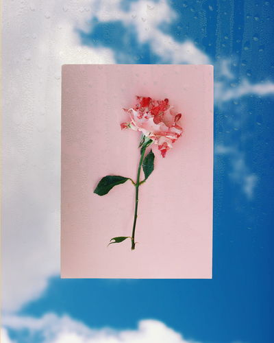 LOST Flower Rosé Pink Blue Sky Photography Flower Sketch Pad Paper Watercolor Painting Sky Close-up
