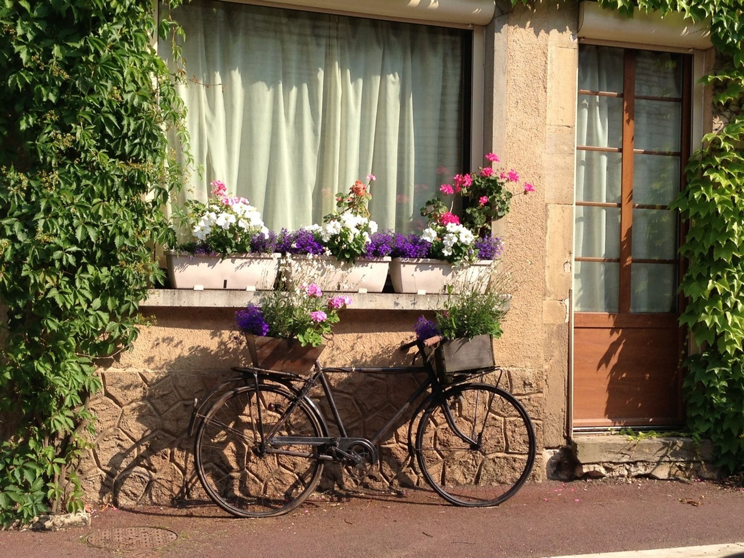 bicycle, building exterior, architecture, stationary, built structure, parked, mode of transport, transportation, land vehicle, parking, house, window, day, potted plant, wall, tree, no people, flower, plant, growth