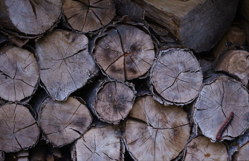 Backgrounds Firewood Large Group Of Objects Nature Outdoors Timber Tree Wood Focus On The Story EyeEmNewHere