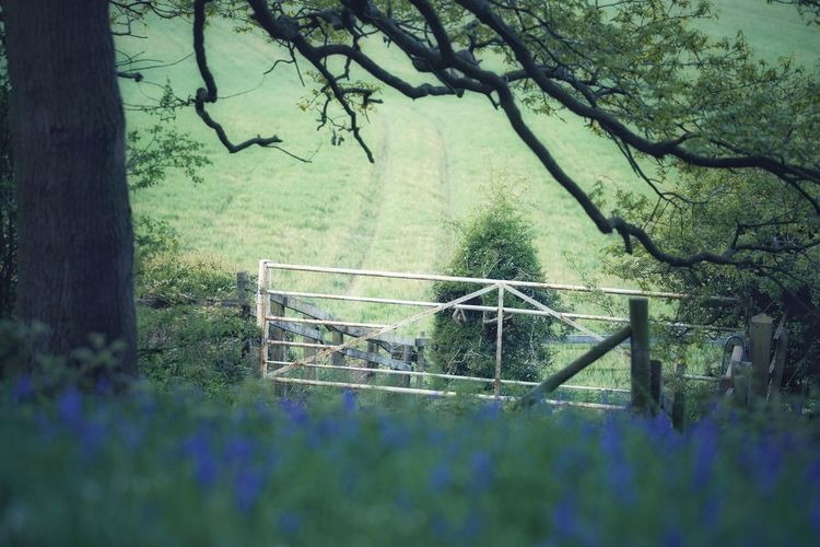 Trees on field seen through fence