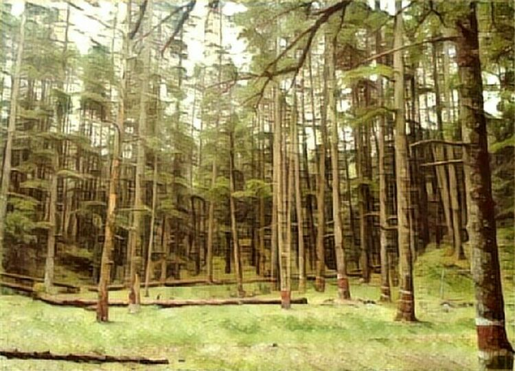 Trees Forest Tree Nature Tree Trunk WoodLand No People Outdoors Growth Design Paper Indoors  EyeEmNewHere Design Art Portrait