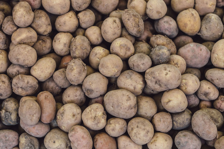 Group of potatoes. Agriculture Diet & Fitness Freshness Madeira Island Portugal Abundance Brown Close Up Close-up Food For Sale Freshness Healthy Healthy Eating Healthy Food Healthy Lifestyle No People Potato Producer Raw Potato Retail  Still Life Store Vegetable Wellbeing