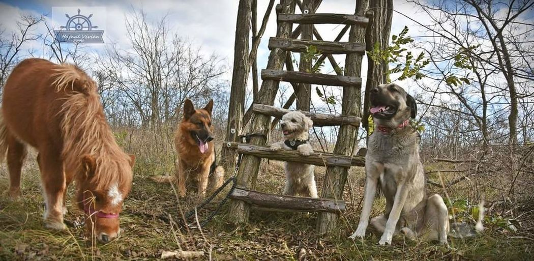 Hunter Les Dogs 🐕 Best Forest🌲🌳 Three