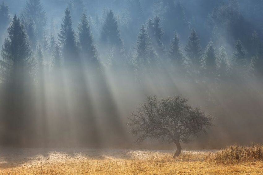 восточный Nature Beautiful Sunrays Ulan-Ude