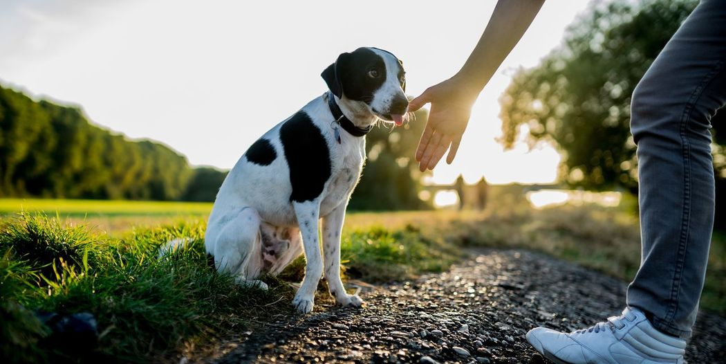 Dog Pets Domestic Animals Animal Themes Outdoors Nature One Animal Bestdogmodel Friend Dogs Dogslife Dogs Of EyeEm Dog Love Outdoor Photography Nature Nature Collection Nature Photography Natural Beauty Ronlemage Live For The Story Fresh On Market 2017