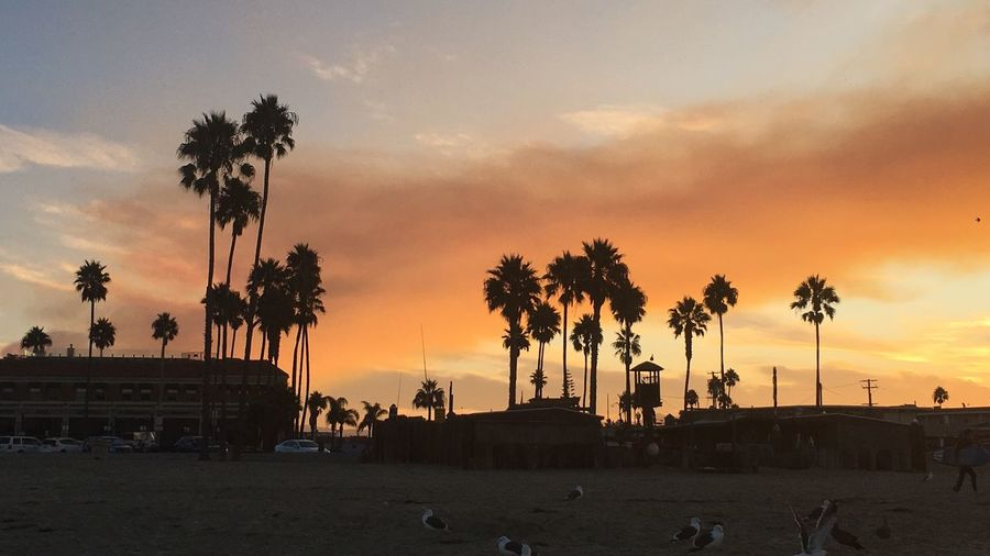 California Love California Coast California Palm Silhuette Palm Tree Sunrise_sunsets_aroundworld Sunrise_Collection Sunrise Beauty In Nature Silhouette Cloud - Sky Scenics Tranquil Scene Outdoors Tranquility Tree Trunk Sea Travel Destinations Vacations No People