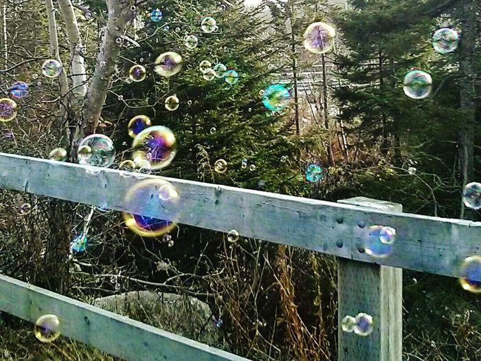 Bubbles and nature Enjoying Life