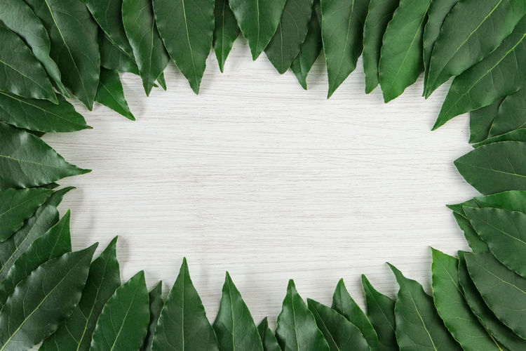 Directly above shot of green leaves arranged on wooden table