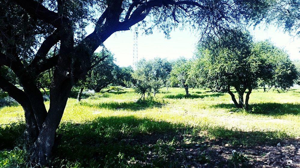 سماء Green Grass Agadir Morocco Water Beautiful Outdoors Africa Cloud - Sky مغربي Morocco 🇲🇦 اغادير شجره Morocco Morocco 青の街シャウエン Tree Cloudy مغرب ArganOil Argan Trees A