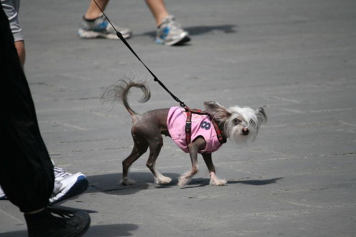 Dog Dog Fashion Doggy Love Dogs Of EyeEm Lifestyles Pet Collar Pet Owner Pets Walking Around Walking The Dog