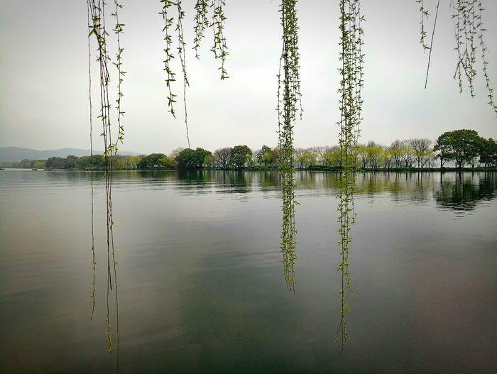 春水碧于天,画船听雨眠。 苏堤 杭州西湖 春