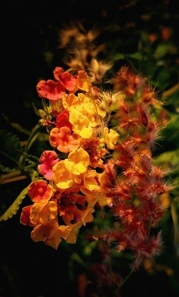 Flower Nature Beauty In Nature Plant Growth Freshness No People Fragility Outdoors Flower Head Close-up Yellow Art By Nature Branches Pattern Focus On Foreground Day Wondrous Nature Bouquet Dazzling Bouquet Wildflowers Leafy Goodness Saturated Naturally Golden Hour In Action Golden Hour Photo