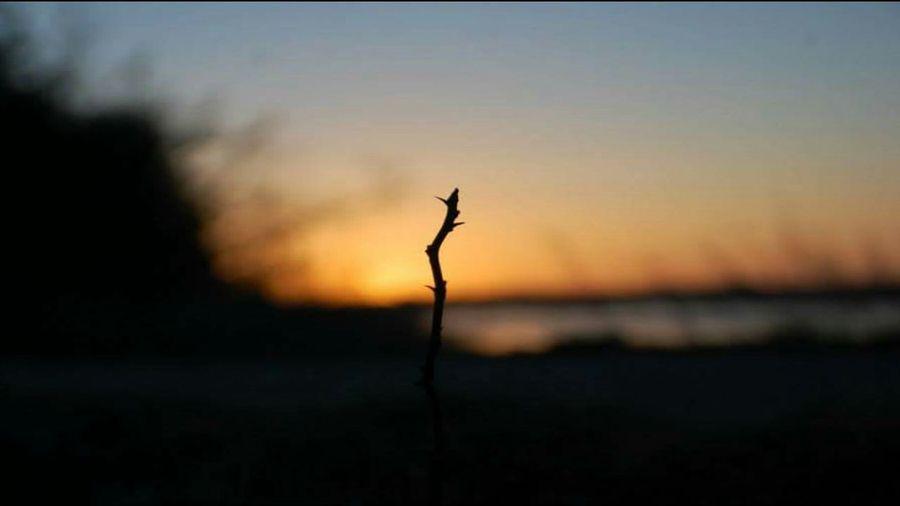 Wintry sunrise