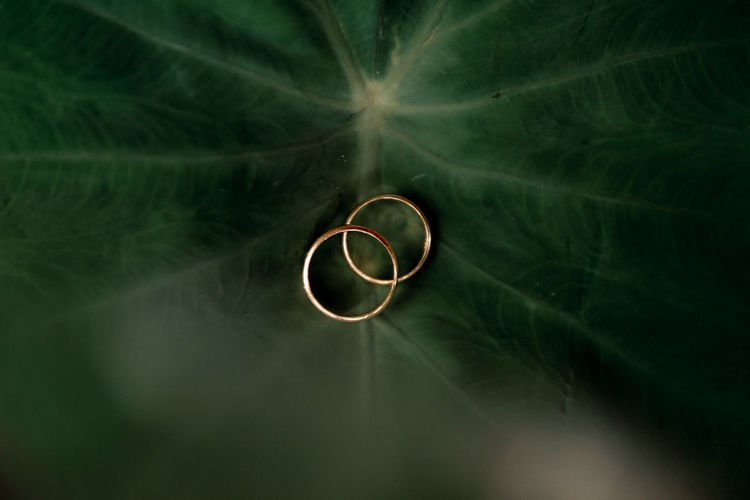 High angle view of wedding rings on water