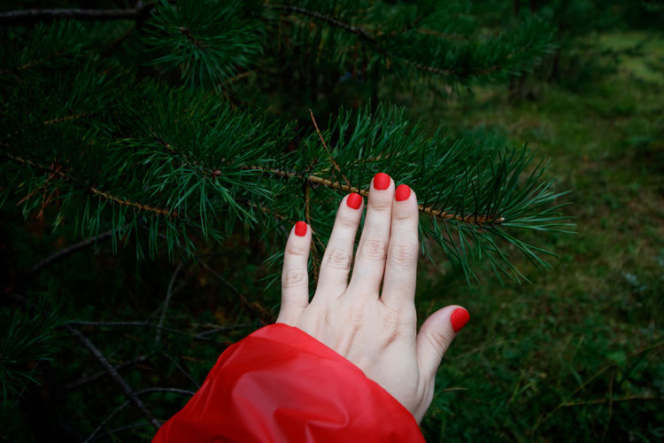 Woman's hand in a red raincoat is touching pine.