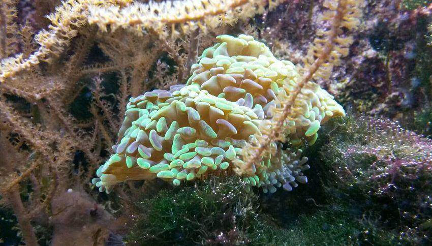 Korallenlandschaften Hagenbeck  Hagenbecks Tierpark Hamburg  Zoo Zoo Animals  Aquarium Aquaristik Meer