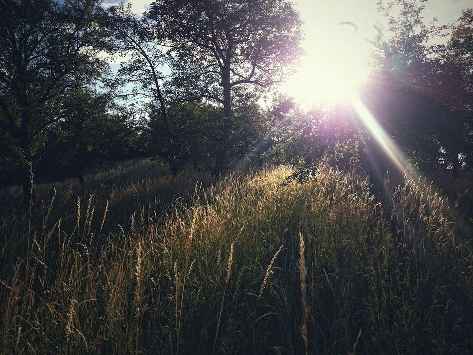 Taking Photos Beautiful Nature Trees Sunset