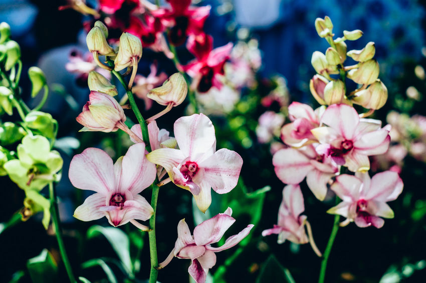 ground orchids Orchid Backgrounds Beauty In Nature Blooming Close-up Flower Flower Head Fragility Freshness Ground Orchid Growth Leaf Nature Outdoors Petal Plant Pollen Selective Focus Wild The Week On EyeEm