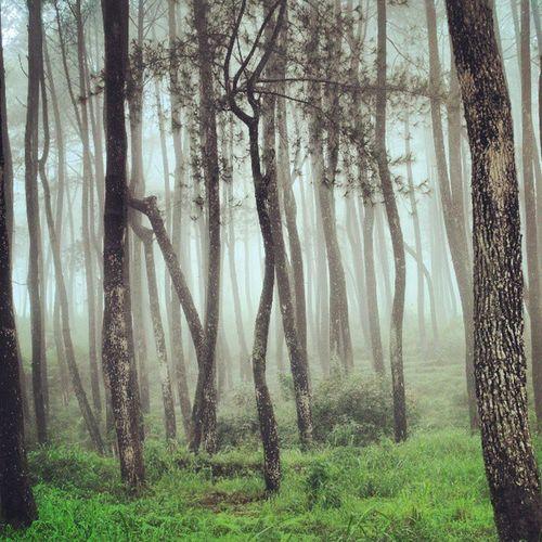 Sunyi di keramaian Kabut Pohon Sunyi