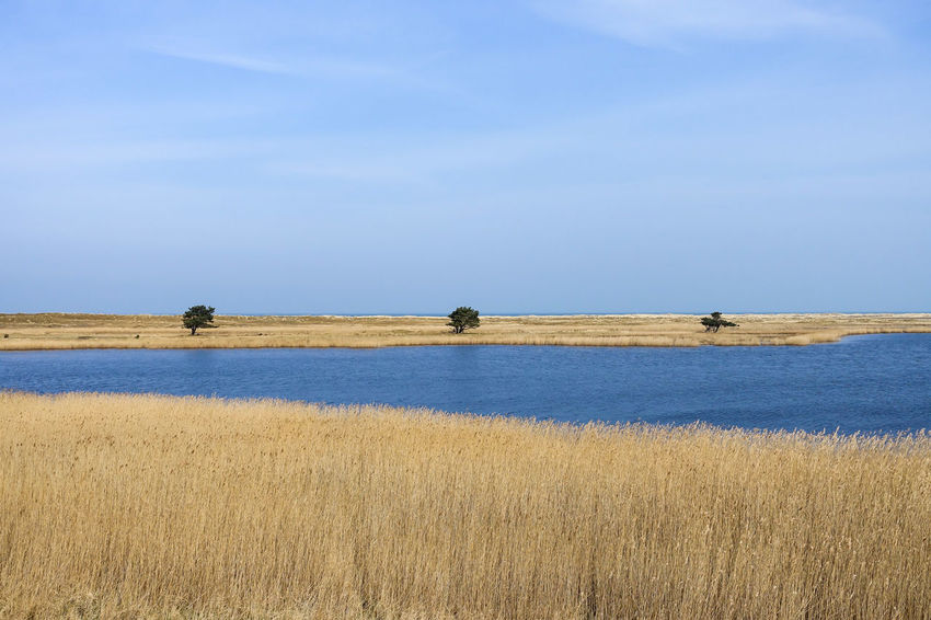 Art Is Everywhere Bodden Fieldscape Ostsee Beauty In Nature Nature Outdoors