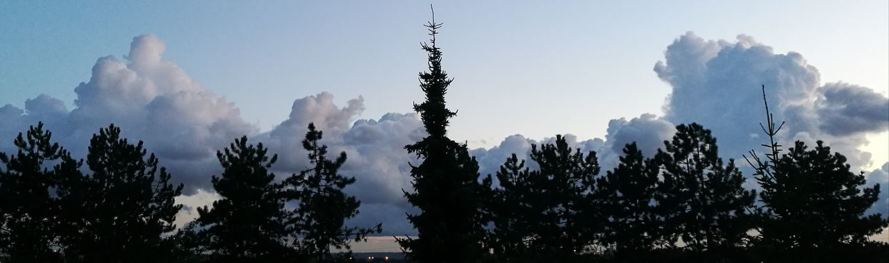 Pinaceae Tree Outdoors Silhouette Cloud - Sky Nature Sky No People Mountain Day