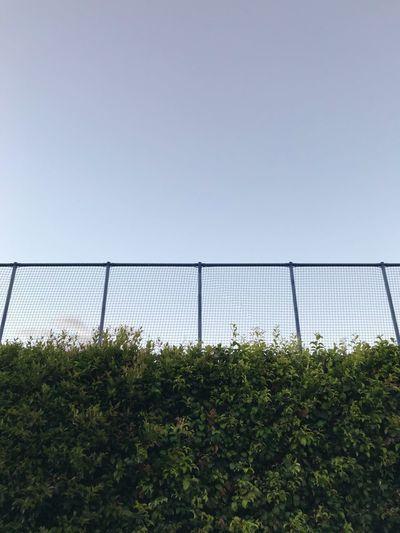 Fenced Suburbia Bush Hedge Hecke Zaun Fence Copy Space Clear Sky Growth Day No People Plant Outdoors Nature Sky