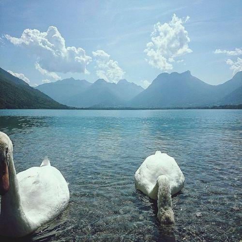 Lake Annecy, France Cygne Montagne