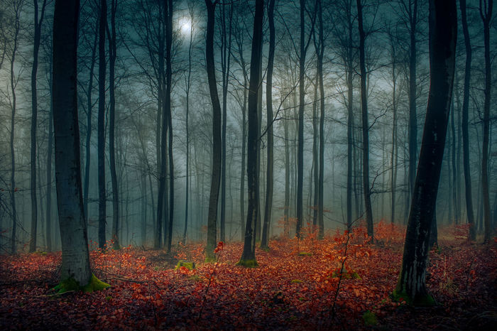 Evening autumn moment Natural Trees Autumn Background Fall Fog Foggy Foggy Morning Forest Forest Photography Forestwalk Mist Nature Tree WoodLand Woods