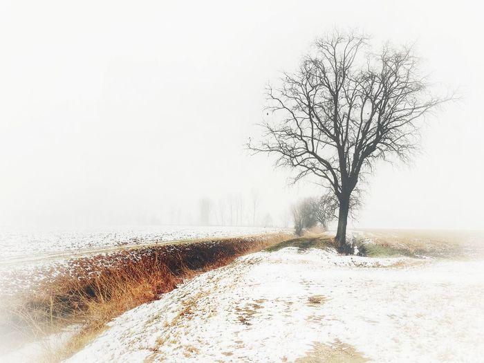 Tree Nature Sky Plant Clear Sky Snow Winter