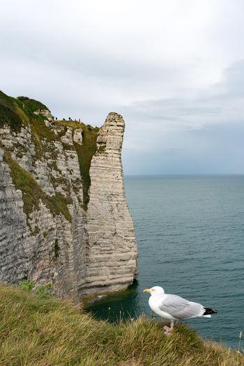 Seagulls on a sea