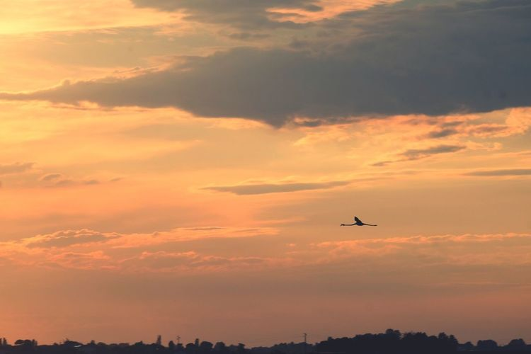 EyeEm Selects Commercial Airplane Bird Airplane Flying Aerospace Industry Sunset Plane Air Vehicle Mid-air Silhouette