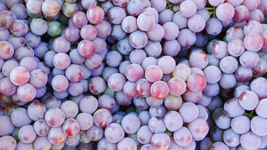 ezefer Large Group Of Objects Full Frame Backgrounds Abundance Freshness Food Food And Drink High Angle View Healthy Eating Wellbeing Still Life No People Day For Sale Outdoors Close-up Market Retail  Fruit Choice Purple Consumerism Jundiaí Winery Vineyard Grapes Grape