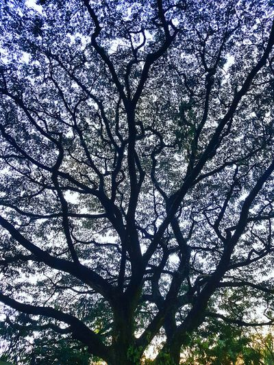 Tree Backgrounds Low Angle View Full Frame Branch Day Growth No People Nature Outdoors Silhouette Beauty In Nature Close-up Sky Cebu City City Check This Out Abstract