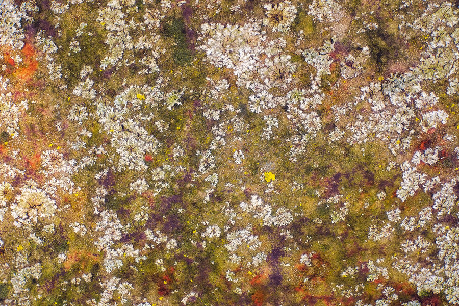 Old rusty metal plate covered with lichen and moss Backgrounds Beauty In Nature Close-up Day Flower Full Frame Growth Lichen Licken Nature No People Outdoors Rusty Metal Plate Textured  Tree
