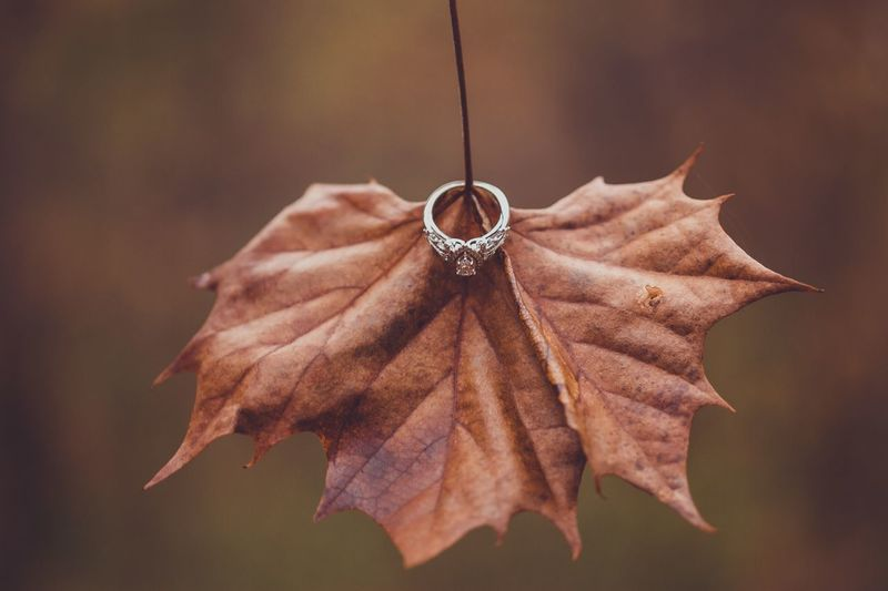 Engagement ring on autumn leaf