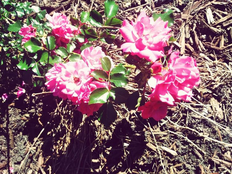 Flower Head Flower Petal Blooming Plant